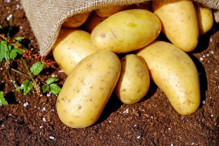 Wysokiej jakości żywność ekologiczna