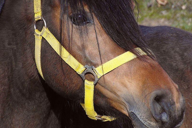 Dobry sklep internetowy dla miłośników koni